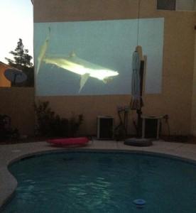 Shark Week Pool